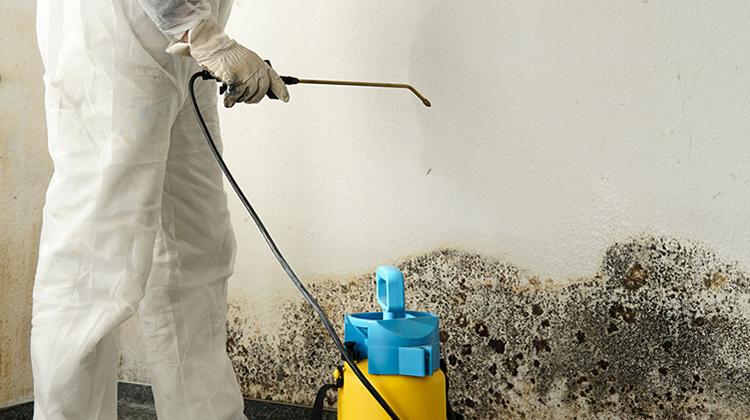 moisissure murs